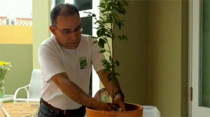 Alexis Molinares demonstrates how to plant a tree.